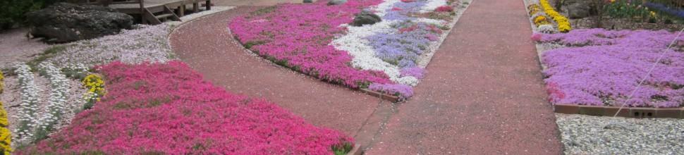 芝桜2012春
